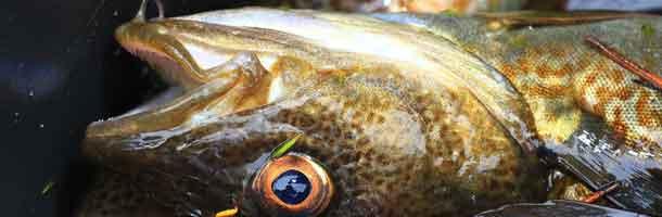 Minister mødt af utilfredse fiskere