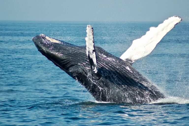 Video: Fisherman swallowed by humpback whale