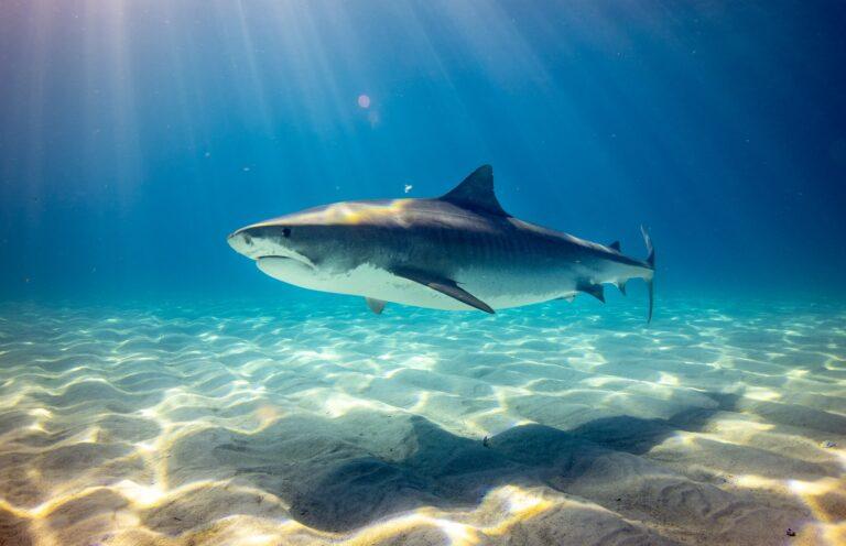 Mand dræbt af haj under vandladning ved Brazil Beach