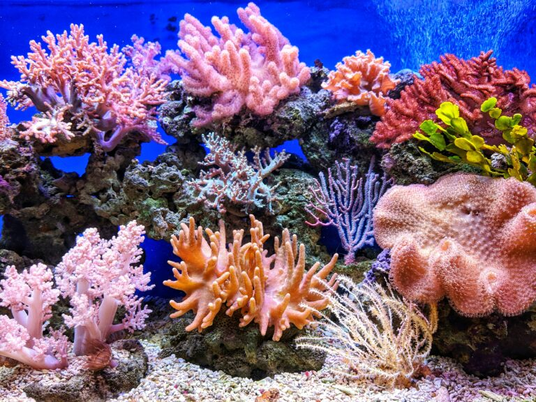 Virulent coral disease linked to ballast water from ships