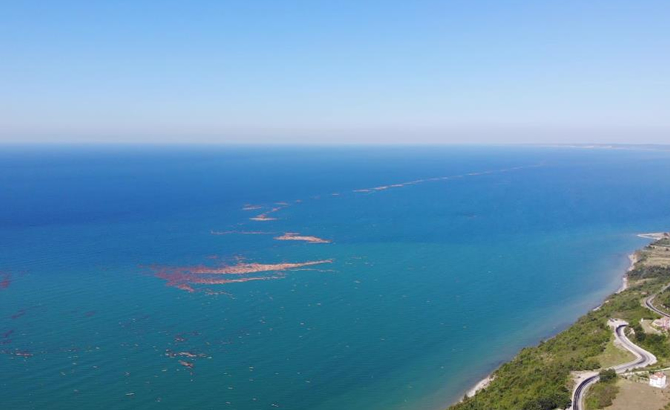 Log Islets Begin to Form in the Black Sea