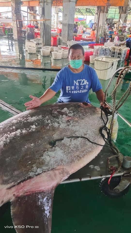 Massive 128kg Ocean Fish Caught in Taiwan Waters
