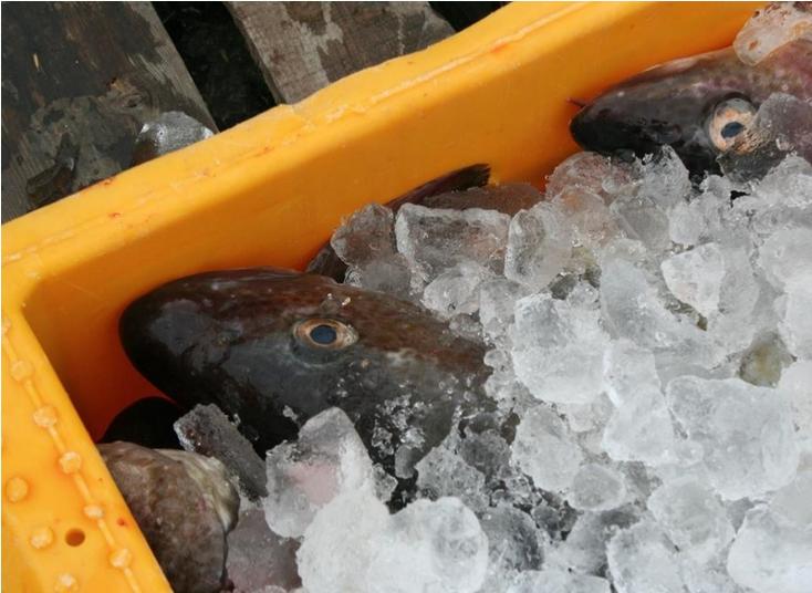 Stort fald i eksporten af fiskeprodukter