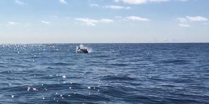 Fiskeristyrelsen tillader øget fiskeri af tun fra Skagen havn