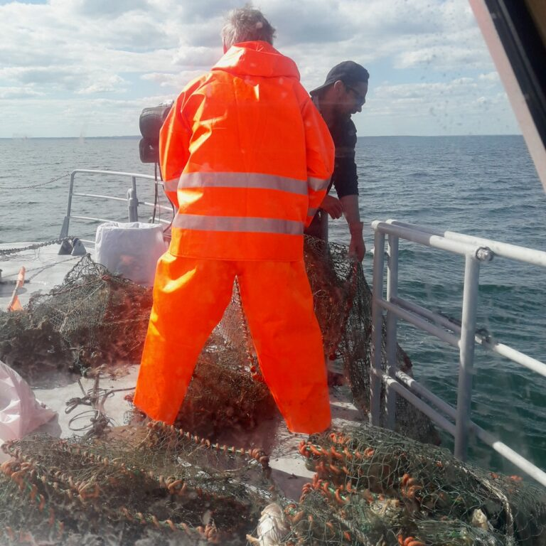 Sæler contra fiskere