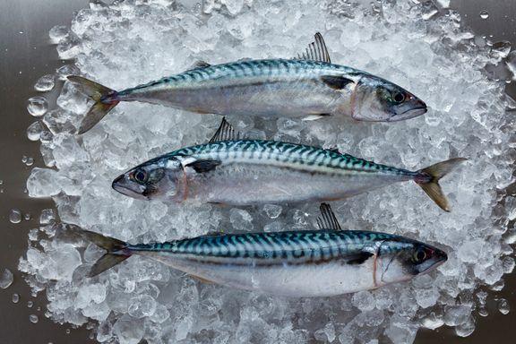 Behov for hurtig indsats for at beskytte fiskebestande i Atlanterhavet